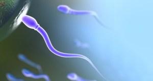 Antioxidantes podem ser eficazes contra a infertilidade feminina