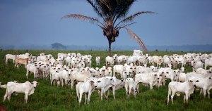 Queda no setor agropecuário afeta os índices de desenvolvimento