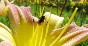 Morte de meio bilhão de abelhas é consequência de agrotóxicos