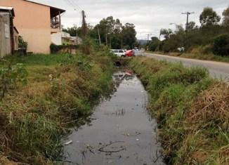 Pesquisadores do Brasil e da Holanda empregam algas unicelulares para tentar resolver o problema da gestão de resíduos gerado pelo processo de tratamento de esgoto - Foto: Wikimedia Commons