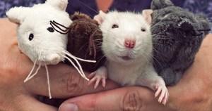 Bichos de pelúcia substituem animais de laboratório em aulas na USP