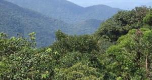 Metodologia permite quantificar mais precisamente o CO2 em florestas