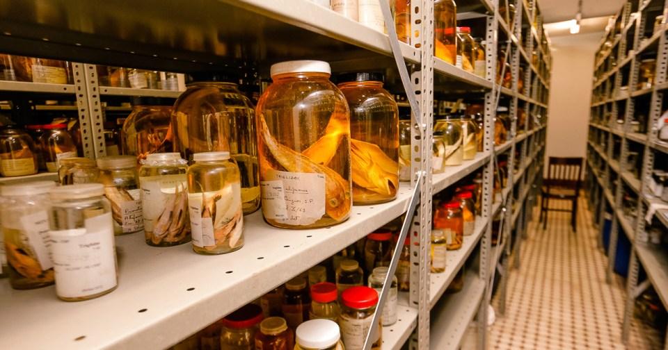 Coleção ictiológica (peixes) do Museu de Zoologia - Foto: Cecília Bastos / USP Imagens