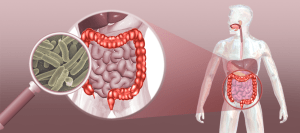 Microbiota presente no intestino pode estar relacionada a doenças autoimunes