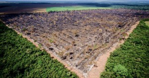 Falta de visão ambiental do governo pode afetar exportações