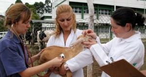 Criado há 100 anos, curso de Veterinária da USP vai além do cuidado com animais