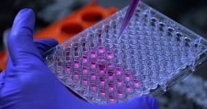 Pesquisa amplia leque de substâncias promissoras contra doença de Chagas
