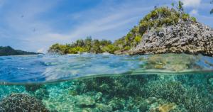 Vida subaquática está sofrendo com ação humana, diz especialista