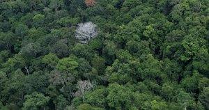 Árvores do planeta serão menos longevas: fenômeno impacta estoques naturais de CO2