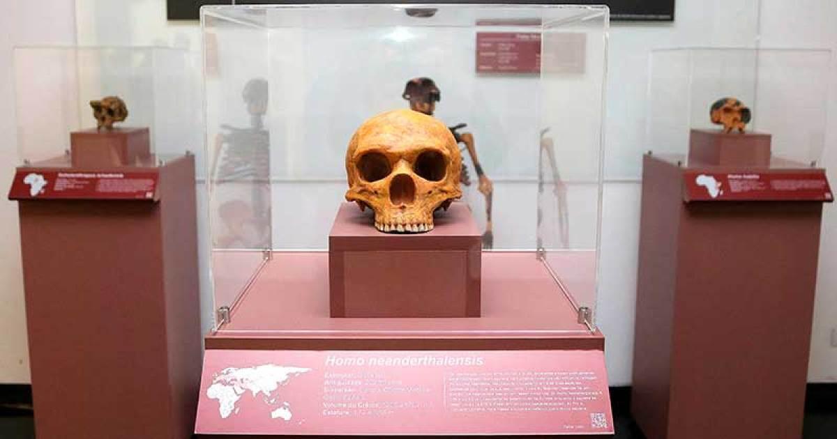 Réplica de crânio de Homo neanderthalensis em exibição na Ocupação Hominínia, no saguão do IEA