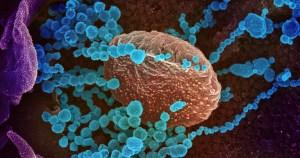 Os desafios impostos pela pandemia aproximaram a sociedade da ciência