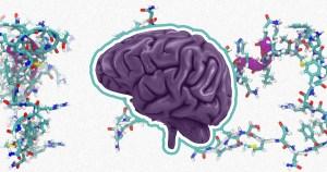 Peptídeos em fluido do cérebro podem servir como marcadores para diagnosticar aneurismas