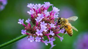 Técnica menos agressiva detecta agrotóxicos em abelhas e pólen para facilitar proteção de colmeias