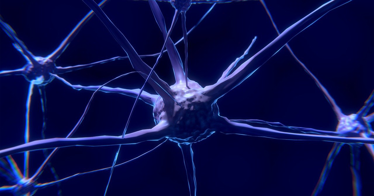 Pesquisadores da Plataforma Científica Pasteur vão usar minicérebros e neurônios obtidos a partir de células-tronco como modelo de estudo - Foto: Colin Behrens/Pixabay