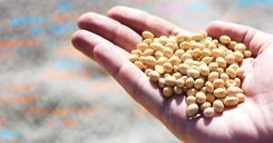 Luz e inteligência artificial revelam potencial de germinação e vigor de sementes de soja