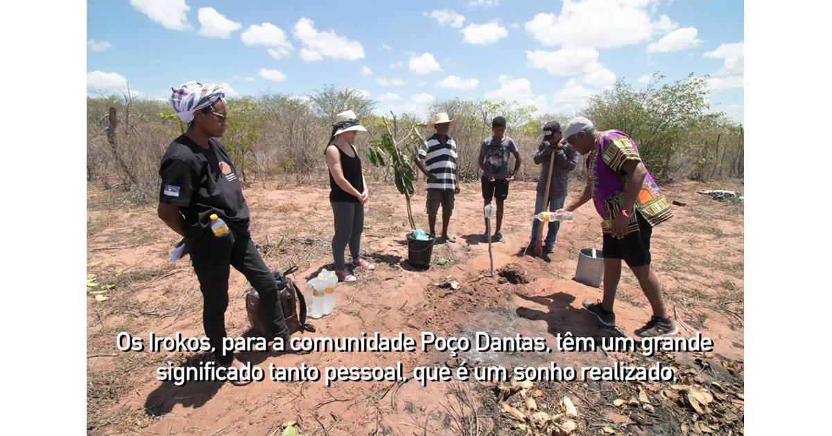 Trecho de vídeo que mostra o plantio de sementes de iroko - Foto: Sandro Soares