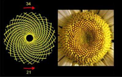 20210126_livro_matematica_interessante_linda02
