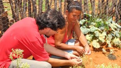 Photo of EBDA incentiva agricultores familiares baianos para recuperar bioma caatinga