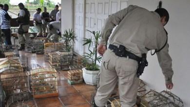 Photo of Inema recebe animais silvestres apreendidos pela polícia em Feira de Santana