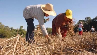 Photo of Plano Safra garante nova linha de crédito para assentados da reforma agrária