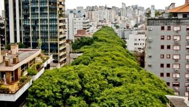 Photo of Rua 'mais bonita do mundo' fica no Brasil; confira imagens