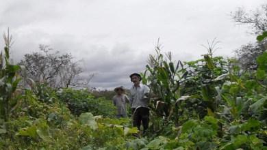 Photo of Chapada: Governo estadual decreta áreas para reforma agrária na região