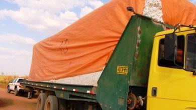 Photo of Adab atualiza a legislação de transporte de capulhos, sementes e caroços de algodão em território baiano