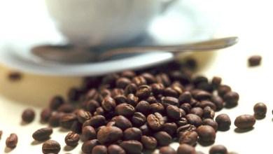Photo of Café produzido na Chapada Diamantina é eleito o melhor do Brasil