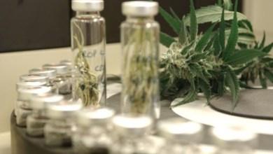 Photo of Conselho autorizará prescrição de canabidiol por médicos de todo o país