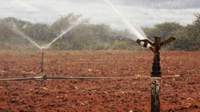 Photo of Mestrado em Horticultura Irrigada inscreve para aluno regular até 5 de dezembro em Juazeiro