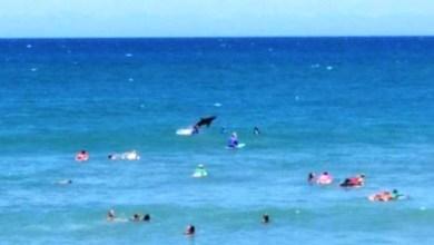Photo of Tubarão invade campeonato de surf na Austrália e vira centro das atenções