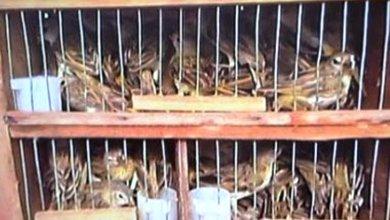 Photo of Conquista: Dois homens são presos vendendo 140 animais silvestres