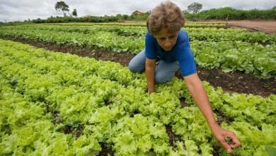 Photo of Brasil: Governo federal destina 22 áreas para reforma agrária