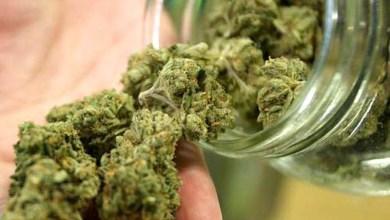 Photo of Mundo: Jamaica vota legalização de produção e consumo de maconha