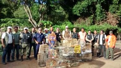 Photo of Chapada: Operação conjunta em Jacobina apreende pássaros, gaiolas e armas