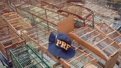 Photo of Chapada: PRF resgata mais de 50 aves silvestres durante ação próximo a Itaberaba