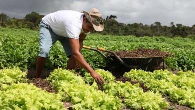 Photo of Prazo para agricultores familiares se inscreverem no Garantia-Safra vai até segunda-feira