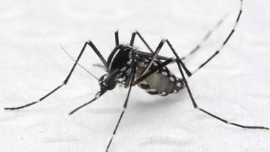 Photo of Governo reúne 125 prefeitos de municípios com maior incidência de doenças causadas pelo Aedes aegypt