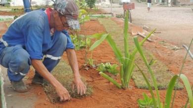 Photo of Chapada: Ação da prefeitura revitaliza jardins em Boa Vista do Tupim