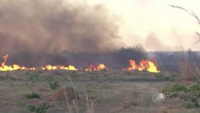 Photo of Bahia: Clima seco e calor agravam situação de incêndios no Oeste; 53 focos foram registrados
