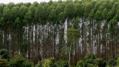 Photo of Setor florestal deve aumentar em 15% o número de empregos na Bahia
