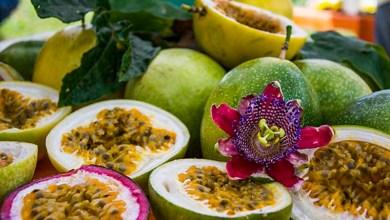 Photo of Com condições favoráveis, Chapada Diamantina se destaca na produção de alimentos orgânicos