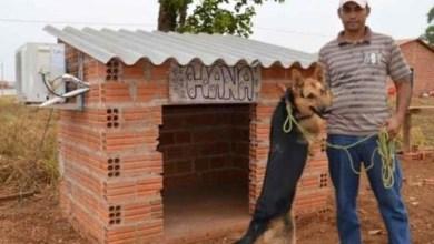 Photo of Brasil: Dono de cadela instala ar condicionado na casinha do animal em Tocantins