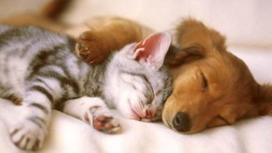 Photo of Ipirá: Grupo realiza campanha para arrecadar ração para cães e gatos no domingo