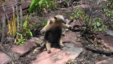 Photo of Conheça as espécies mais comuns da fauna da Chapada Diamantina, entre aves, mamíferos e répteis