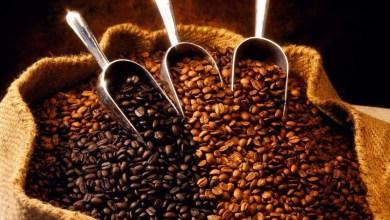 Photo of Chapada: Familiares produtores de café especial em Piatã são premiados em concurso nacional