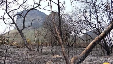 Photo of ICMBio combate cinco focos de incêndios simultâneos no Parque Nacional da Chapada Diamantina