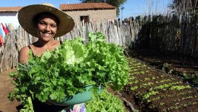 Photo of Experiências baianas de assistência técnica e extensão rural se destacam em concorrência nacional