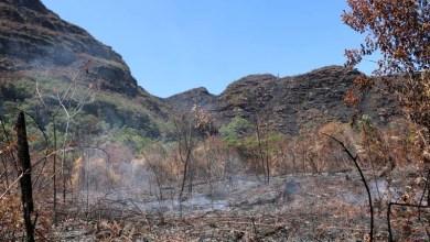 Photo of Incêndios destruíram quase 8 mil hectares do Parque Nacional da Chapada Diamantina em um mês, diz ICMBio
