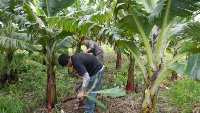 Photo of Chapada: Produtores rurais da região participam de oficinas gratuitas do Sebrae em abril